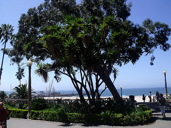 View from Ocean Avenue in Santa Monica