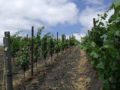 Keller Estate Winery – Petaluma, California