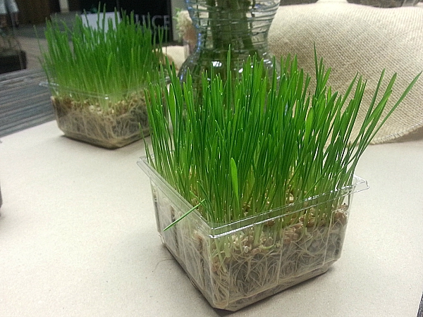 Urban Produce Indoor Organic Farm - Irvine, California