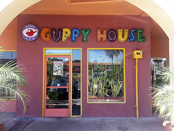 Guppy House - Anaheim Hills, California