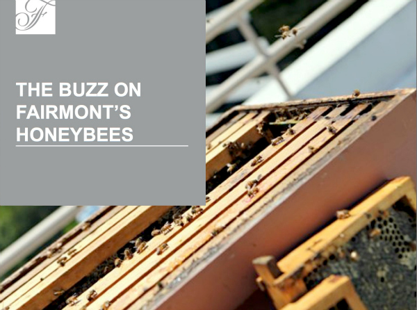 Rooftop Honey Bees at The Fairmont Hotel in Newport Beach
