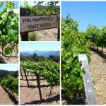 Holman Ranch Vineyards and Winery Tour