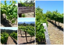 Holman Ranch Vineyards & Winery Tour - Carmel Valley, California