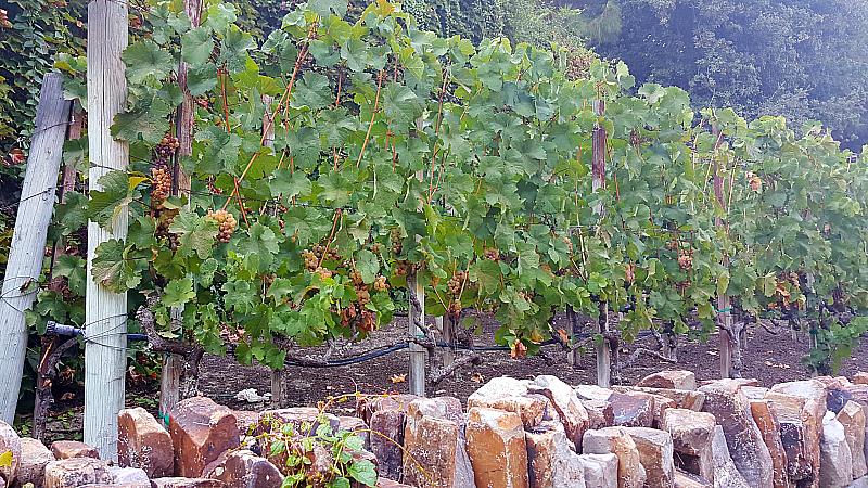 Wine Country Trattoria - Disney California Adventure Park