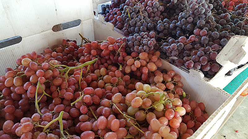 Grapes at SoCo Farmer's Market - Costa Mesa, California