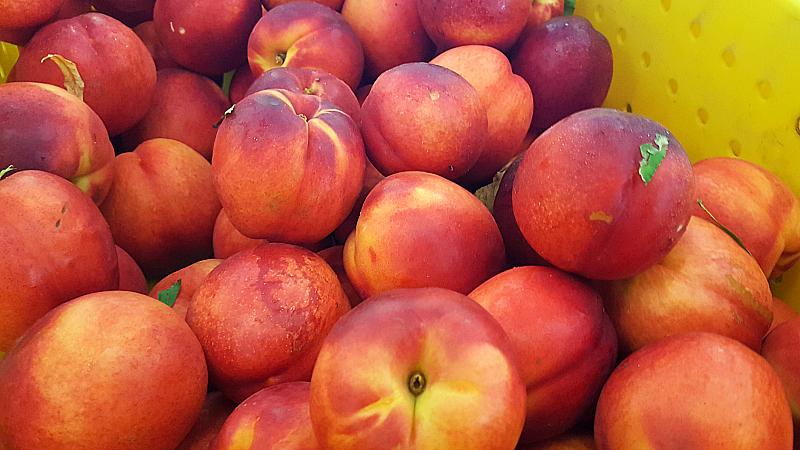 Nectarines at Fresno State University Gibson Farm Market