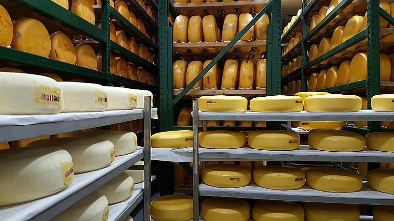 Fiscalini Cheese Farm Tour