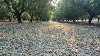 California Almond Farm Tour
