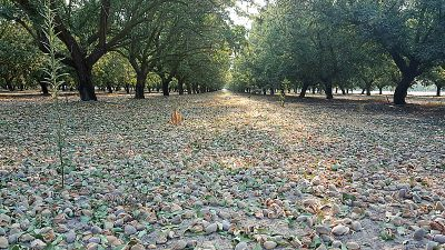 California Almond Farm Tour and 15 Delicious Almond Recipes