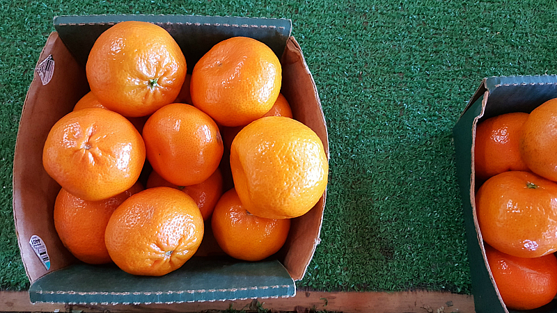 california oranges box