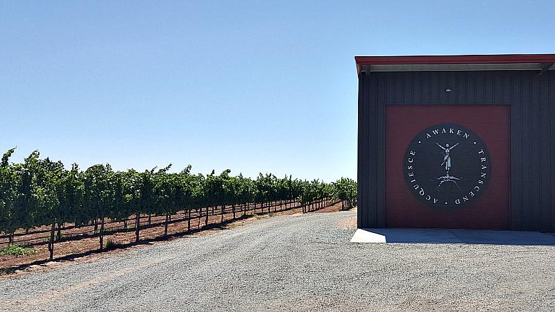 lodi acquiesce vineyard winery