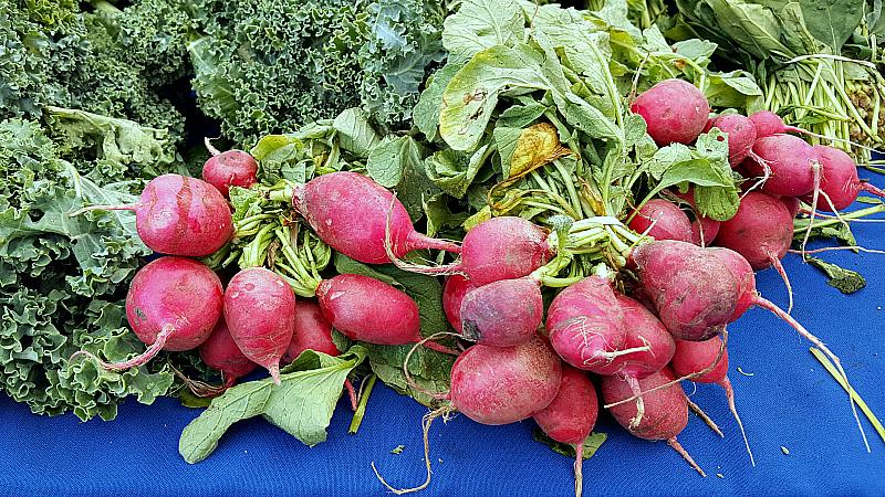 mdr farmers market kale radish