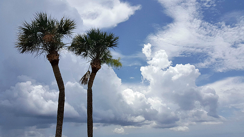 shilohs palms clouds