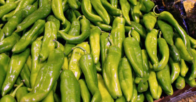 pile of hatch chiles