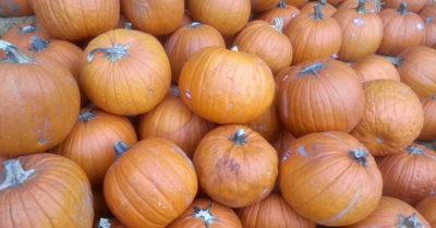 pumpkins best halloween cookies