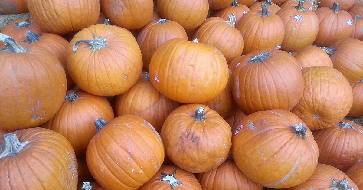 pumpkins fun halloween cookies