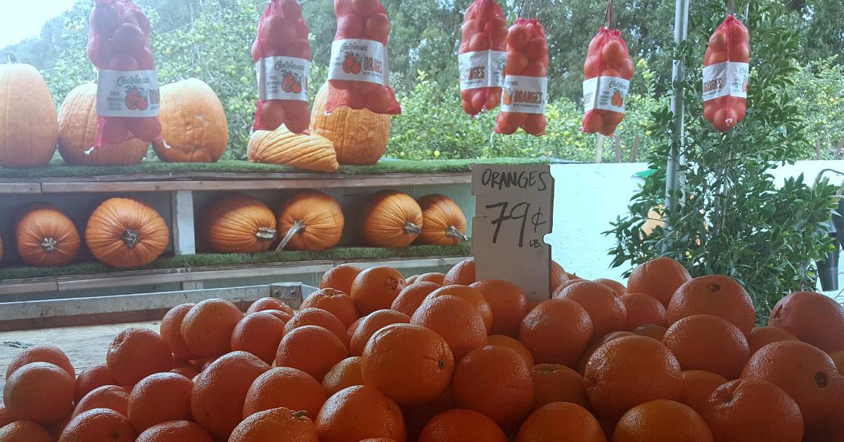 santiagos fruit stand oranges pumpkins