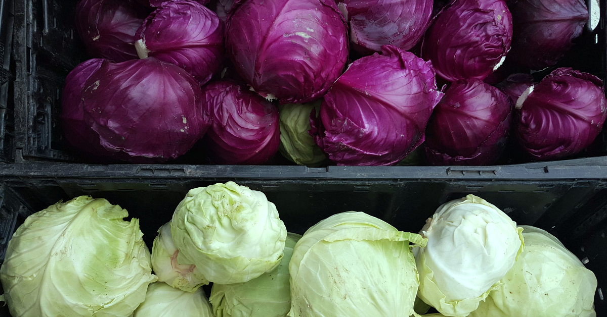solvang farmers market cabbages