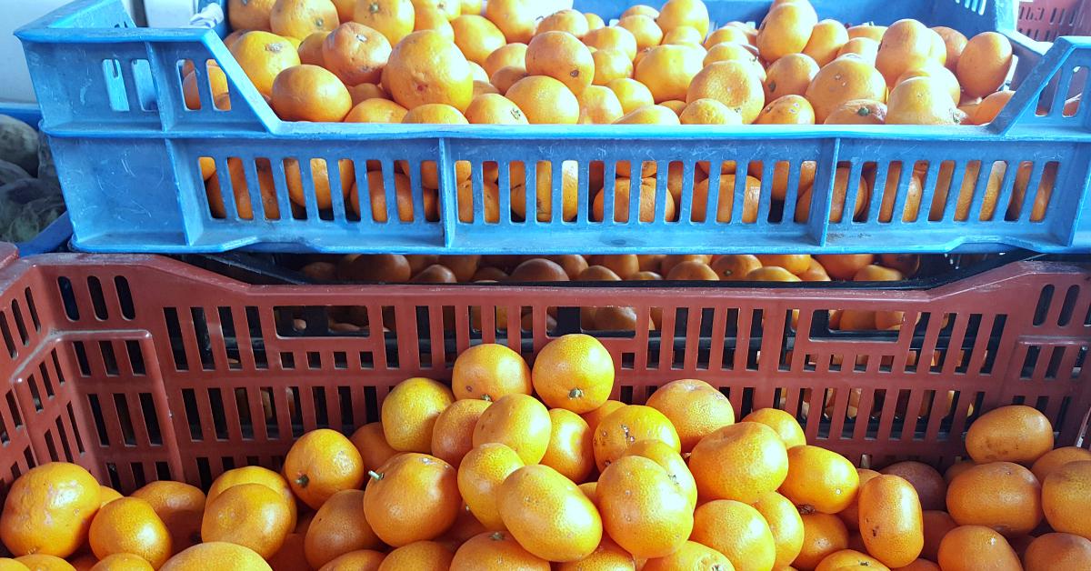 solvang farmers market citrus