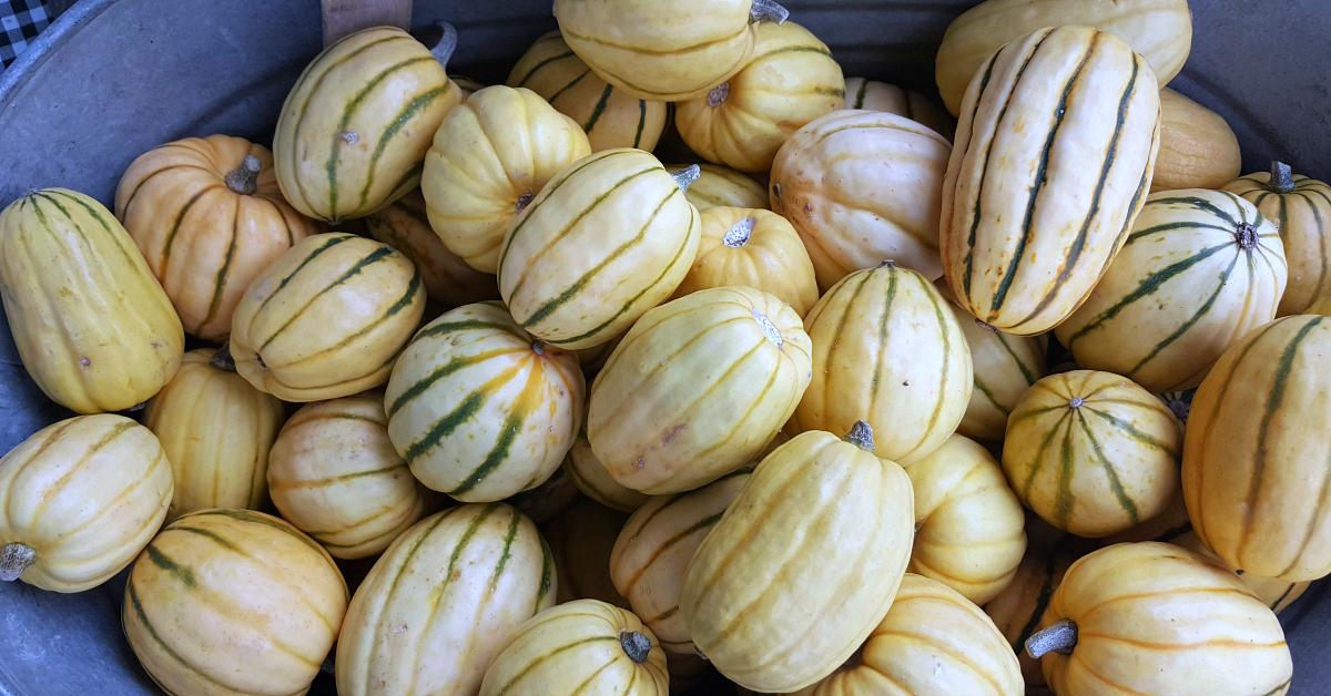 solvang farmers market delicata squash