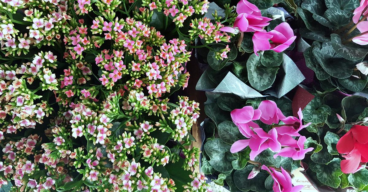 solvang farmers market plants
