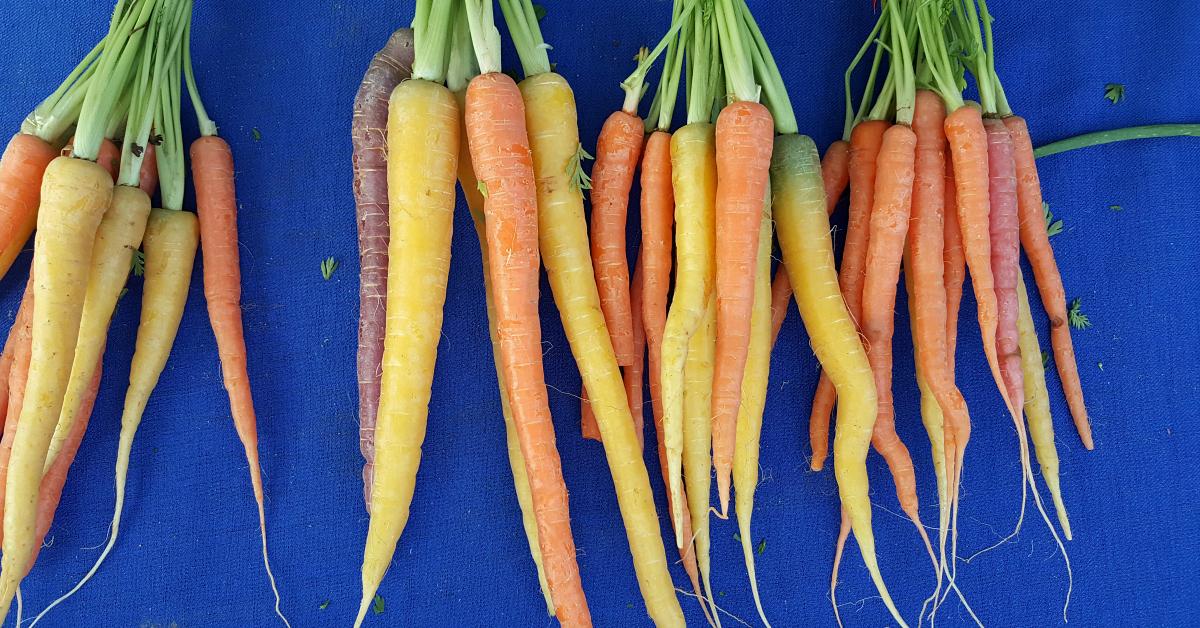 solvang farmers market rainbow carrots