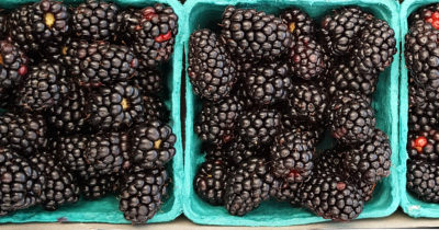 fresh picked blackberries at the market