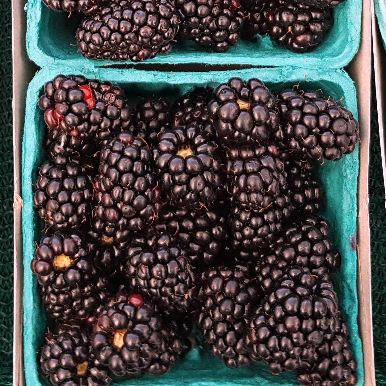 insta blackberries in basket
