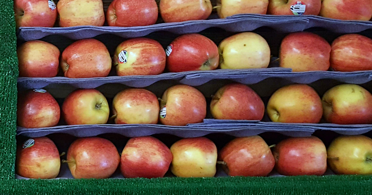 rows of red gala apples