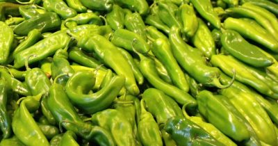 big pile of hatch chiles chile peppers