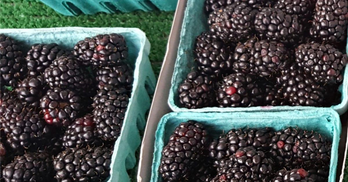 fresh blackberries at the farmers market