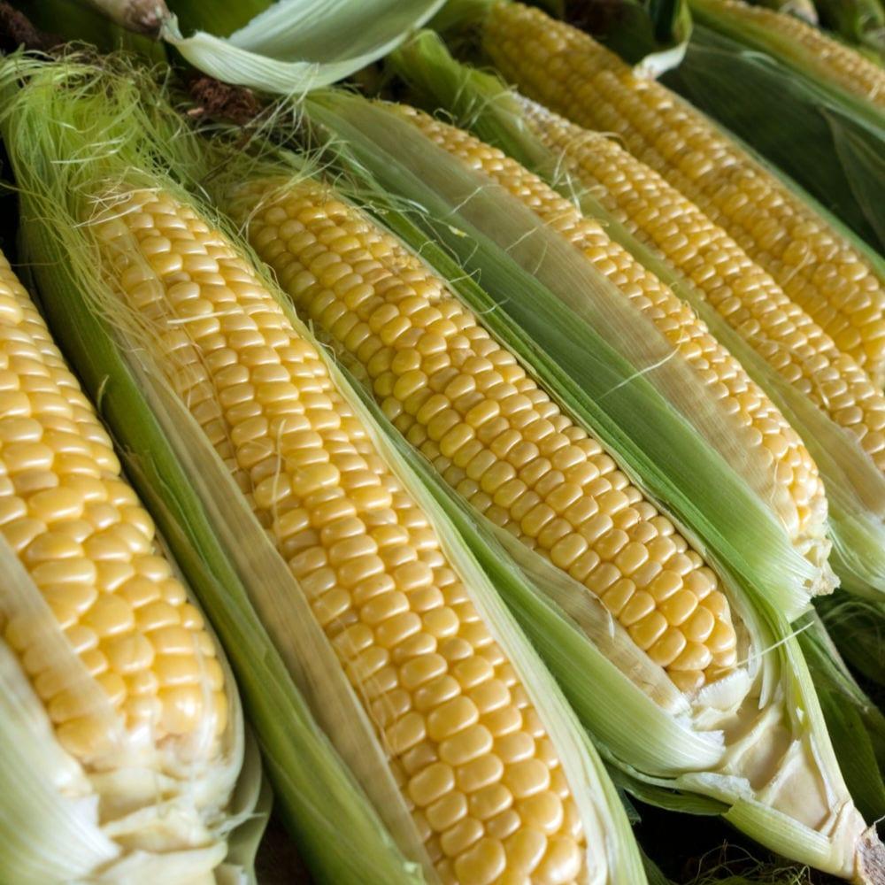 yellow corn on the cob