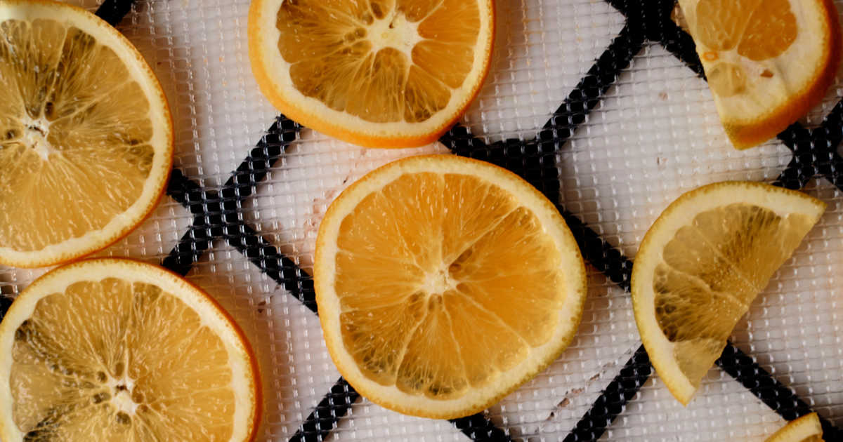 orange slices on dehydrator tray